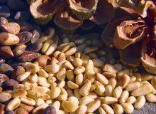 Semintele de pin: mici, dar extrem de valoroase