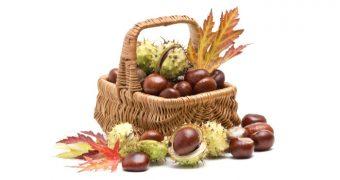 Castanele comestibile, aliment si medicament
