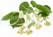 Florile de tei regleaza tensiunea arteriala