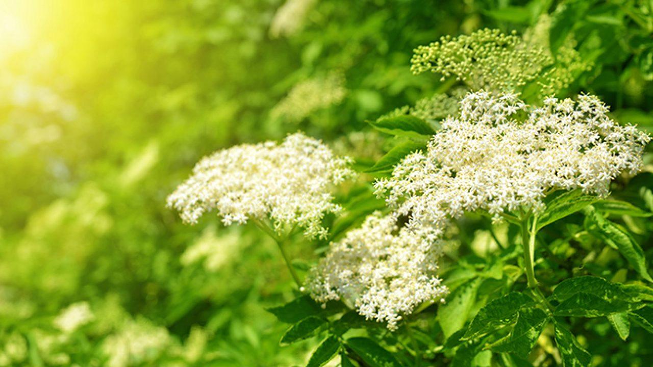 Socul Eficient In Alergii Reumatism Infectii Farmacia Ta