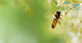 Primul ajutor in caz de… intepaturi de insecte
