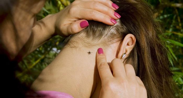 boala muscaturii de capusa