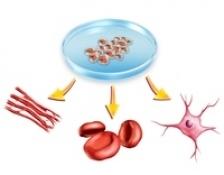 Gelul din celule stem, sansa pentru maduva spinarii