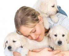 Animalele de companie: sursa de alergeni