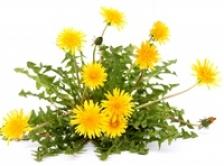 Papadia: o singura planta, mai multe beneficii