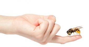 Cat de periculoase sunt intepaturile de insecte