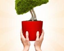 3 plante-minune pentru un ficat sanatos