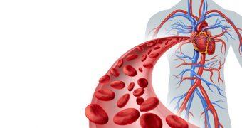 Lucruri surprinzatoare despre sistemul circulator