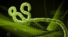 Ebola nu este cel mai periculos virus. Cinci alte virusuri care il detroneaza