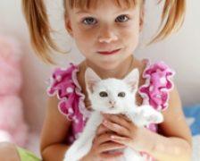 Ce afectiuni se pot lua de la pisica? Ionel Paraschiv, Vatra Dornei