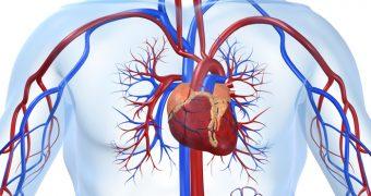 Lucruri surprinzatoare despre vasele sangvine