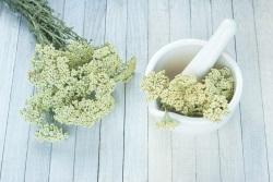 decupat plante diuretice coada soricelului 105806891