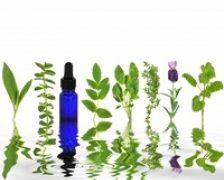 Cele mai eficiente antivirale si antiseptice din plante