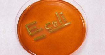 Infectia cu E. coli: cum poate fi prevenita