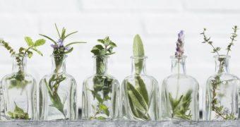 Intepaturile de tantari: remedii naturale