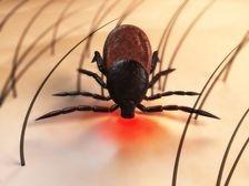 Un gel pe baza de antibiotic impotriva bolii Lyme