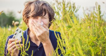 Alergia la polenul de ambrozie
