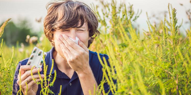 remedii alergia la ambrozie