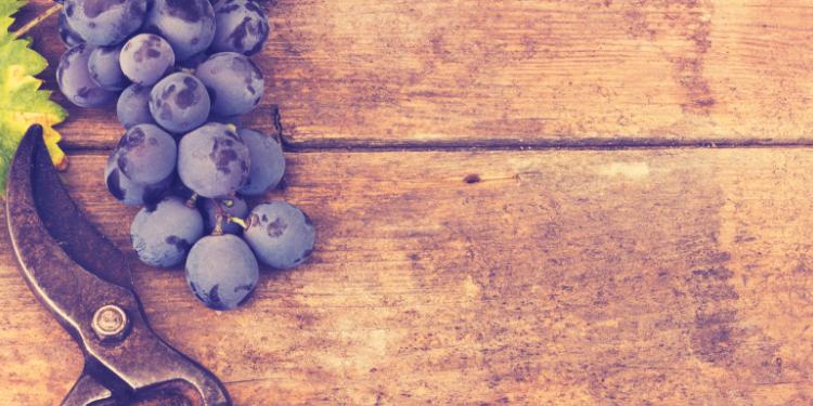 resveratrolul ingredientul longevitatii