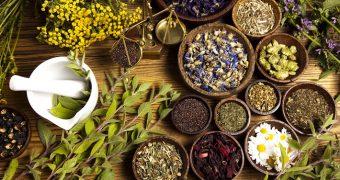 Plante care ajuta ficatul sa se regenereze