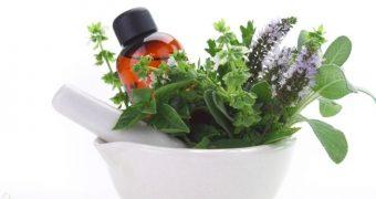 Plante care stimuleaza memoria