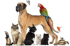 Omul şi animalul său de companie, o relaţie cu multe beneficii