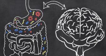 Ce legătură există între intestin şi creier?