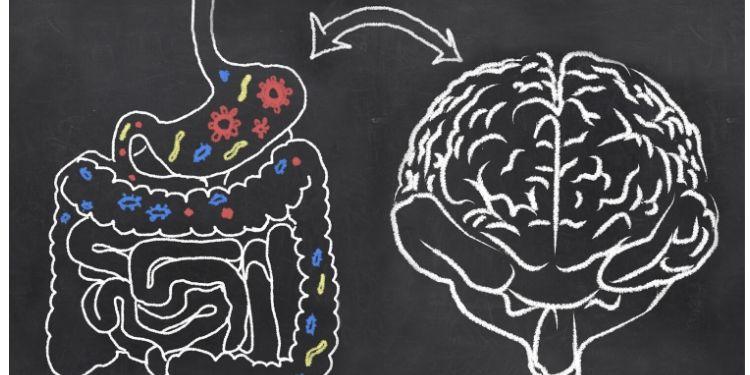 intestin şi creier