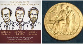 Trei cercetători au câştigat Premiul Nobel pentru Medicină 2019