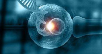 Inseminarea artificială vs FIV: care are cele mai bune rezultate