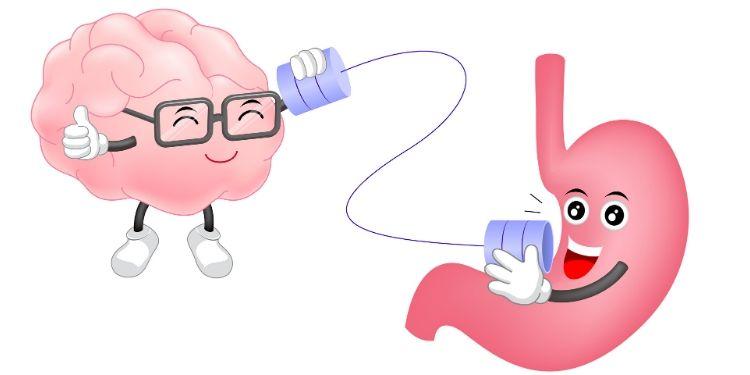 intestin, probiotice, imunitate, gluten, 6 lucruri despre intestin,