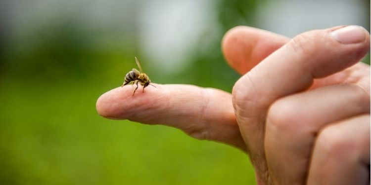 venin de albine, venin, melitina, cancer mamar, cancer de sân, cancer de sân triplu-negativ,