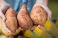 Care sunt mai sănătoşi, cartofii albi sau cartofii dulci?