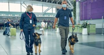 Câinii dresaţi să detecteze bolnavii de COVID-19, mai eficienţi decât testele rapide