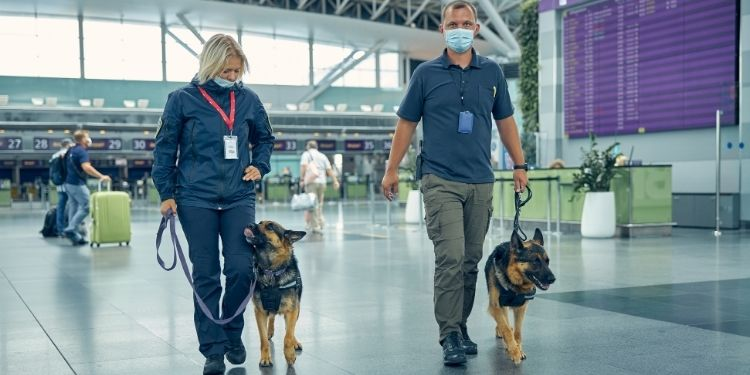 COVID-19, SARS-CoV-2, câinii dresaţi COVID-19,
