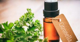 Remedii pentru muşcăturile şi înţepăturile de insecte