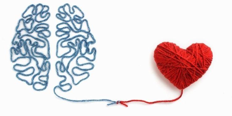 inimă, creier,