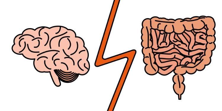 sindromul de intestin iritabil, SII, sindromul de intestin iritabil şi migrena, migrene, migrena, intestin iritabil,